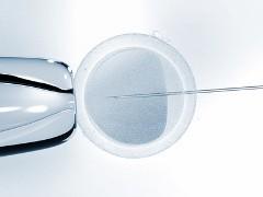 Künstliche Befruchtung unter dem Mikroskop