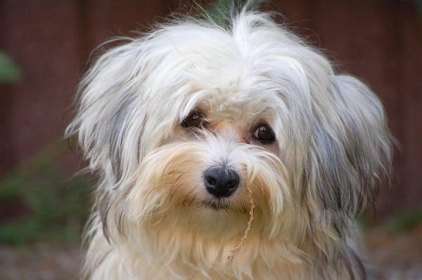 Bild zum Beitrag Kosten für Haustiere sind auch bei laufender Psychotherapie Privatsache
