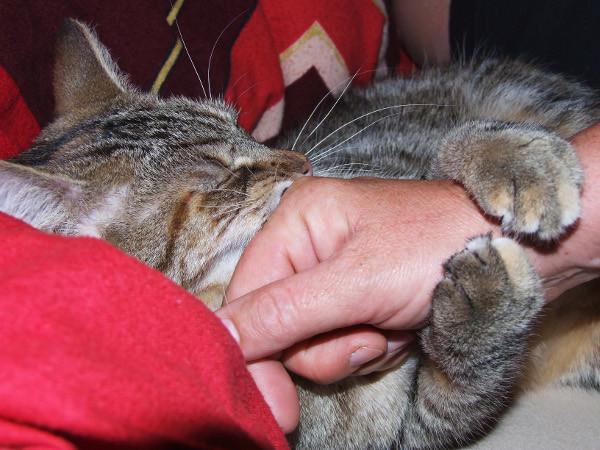 Katzen tun der Gesundheit gut, aber nicht alle und immer