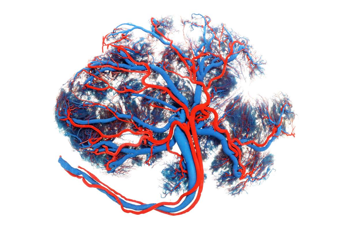 Nabelschnurblut einlagern - Modell einer Placenta
