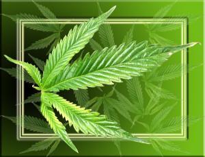 Die Krankenkassen übernehmen die Cannabis-Therapie , (c) Kokopelli / pixelio.de