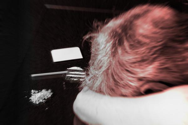 Bild zum Beitrag Crystal Meth verantwortlich für Anstieg der Drogentoten